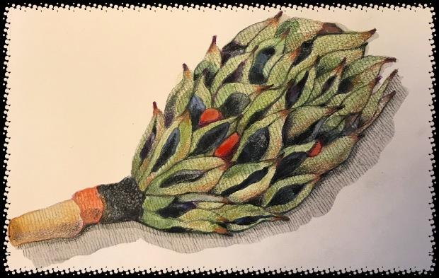 Magnolia Tree Seed Pod Make Artmagic Happens